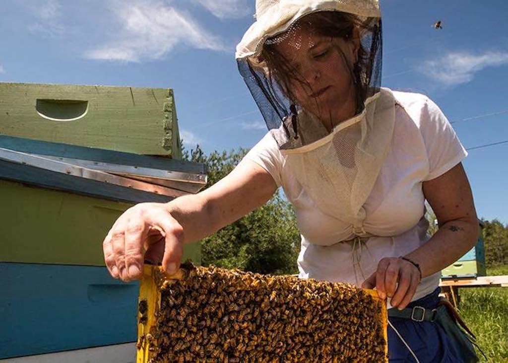 Beekeeper Sarah McKinney