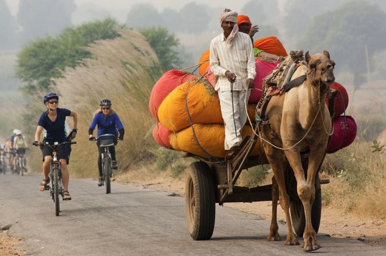 Cyclists behind a camel-drawn cart in Rajasthan India