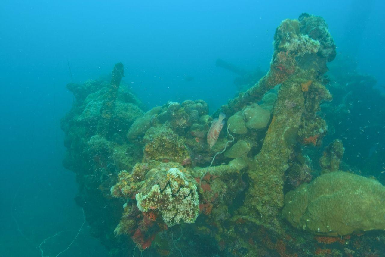 Helmet Wreck in Palau, Micronesia