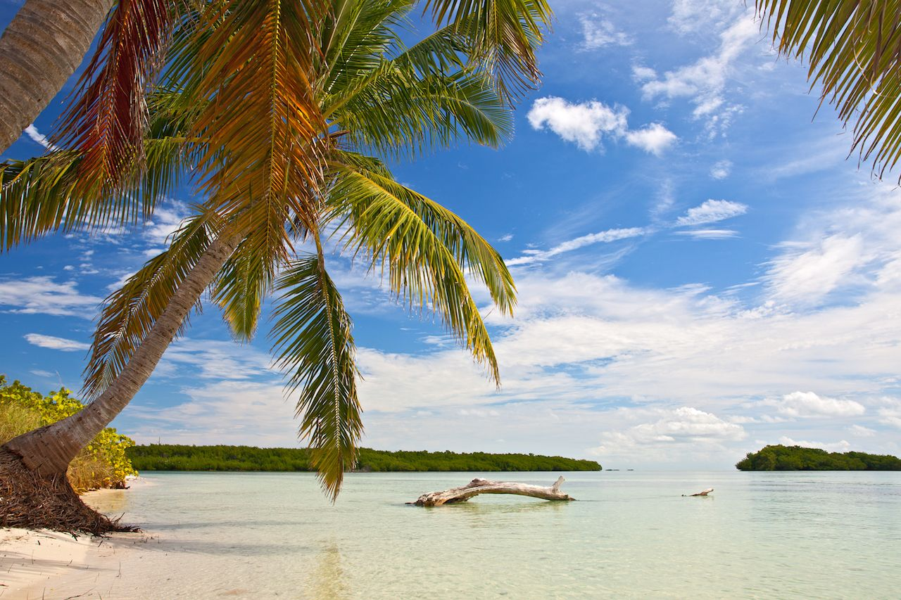 Palm trees, ocean and blue sky on a tropical beach in Florida keys