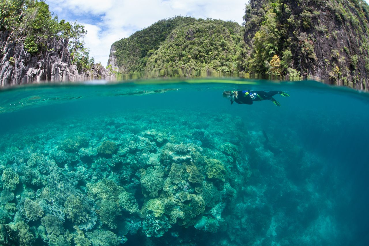 Snorkeler swimming over a coral reef in Raja Ampat