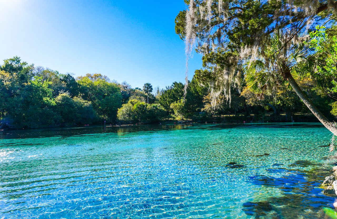 Turquoise water at the Silver Glen Springs Recreation Area in Florida
