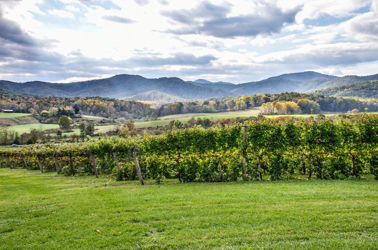 Vineyard in Virginia under dusky skies