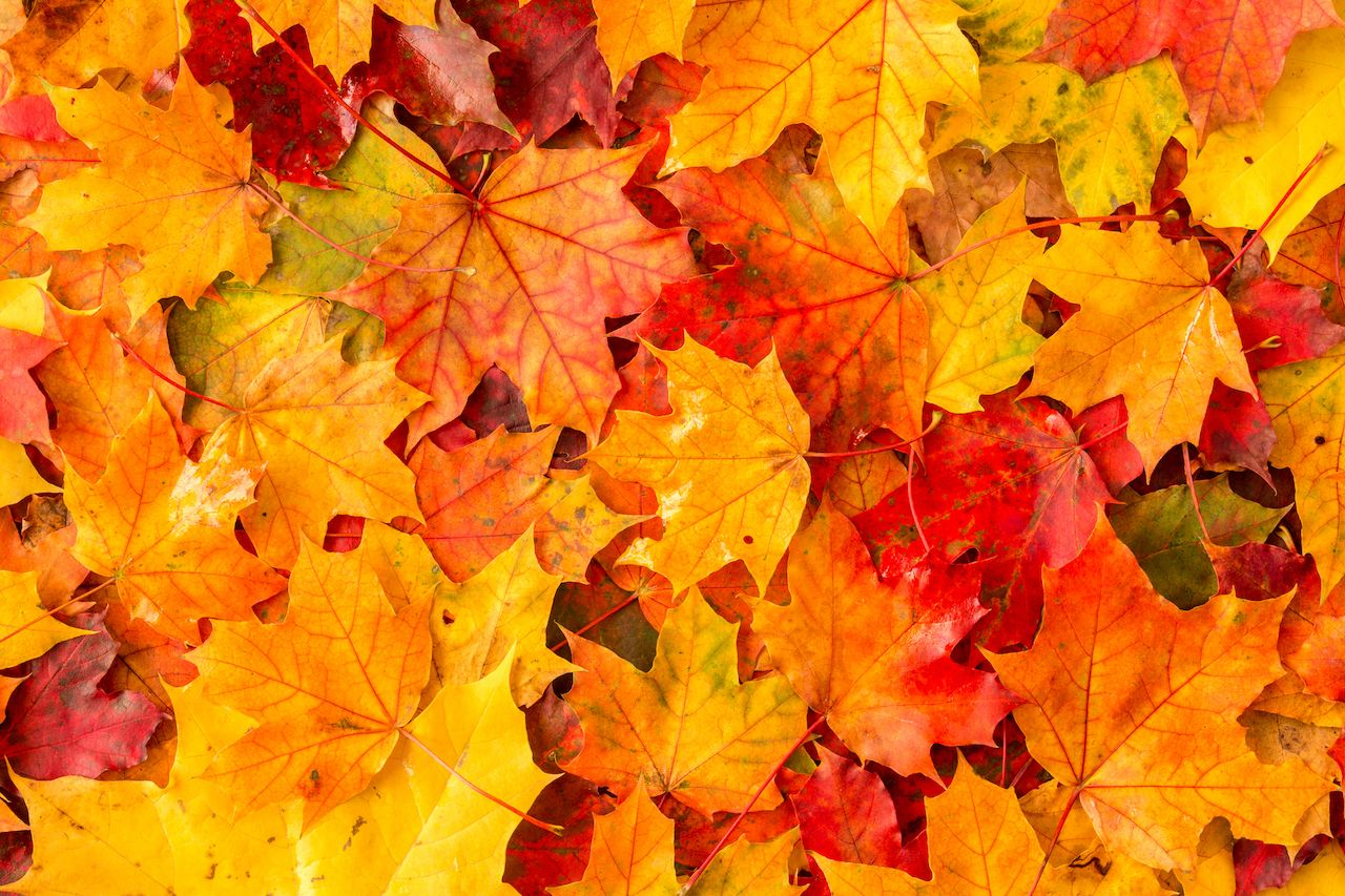 Get paid $1 for every fall leaf