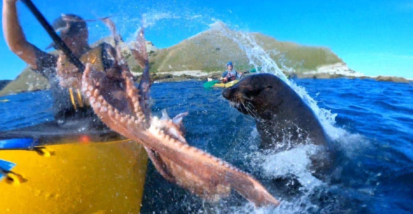 Seal slapped kayaker