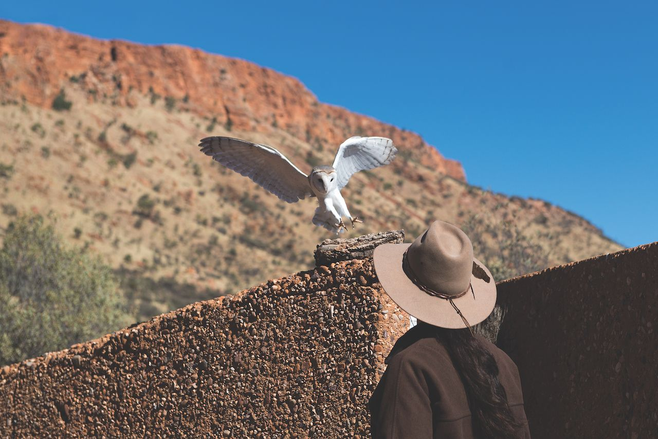 Alice Springs Desert Park Bird Show in Australia