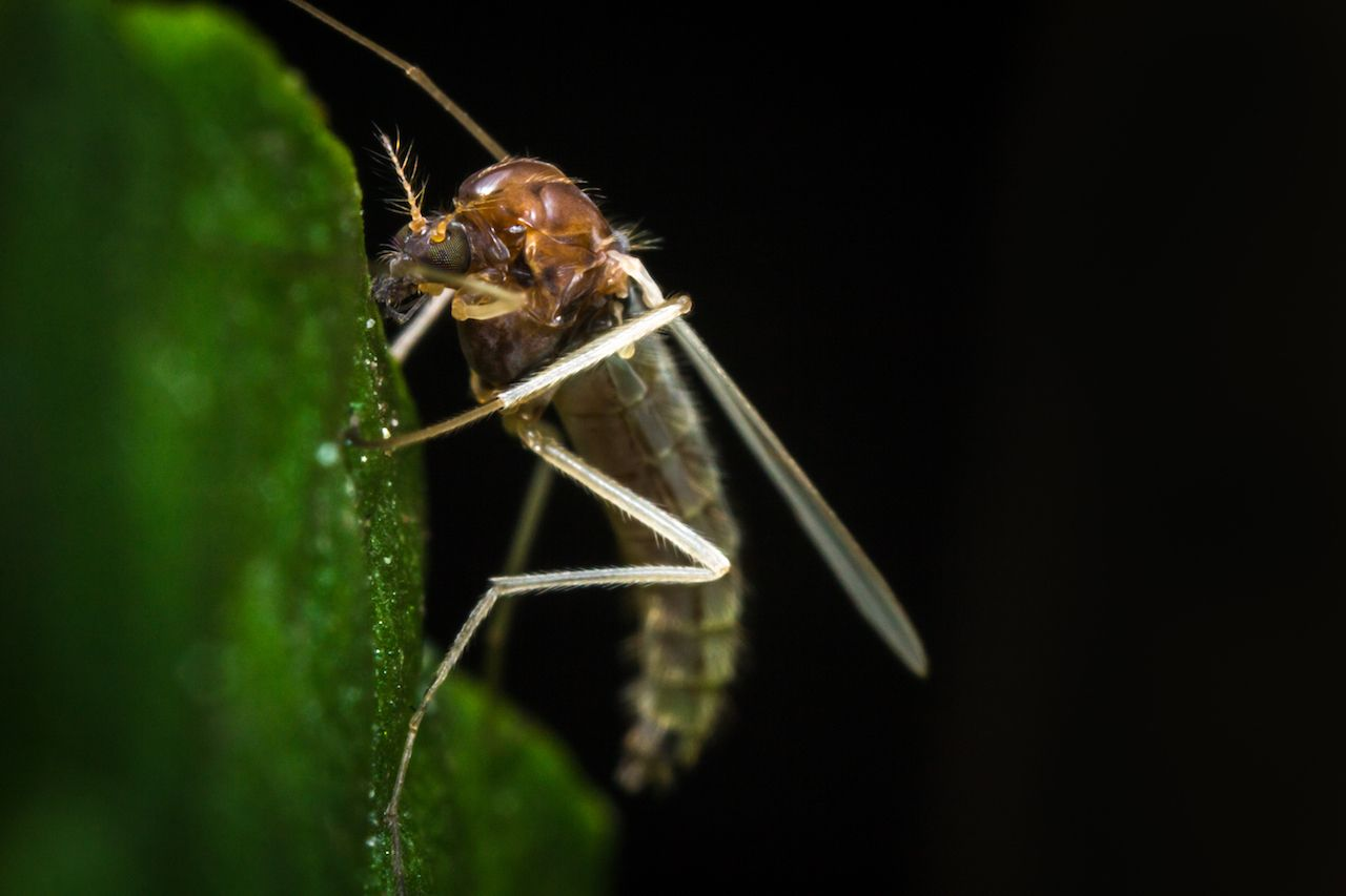 Close up macro of small sand fly on green leaf