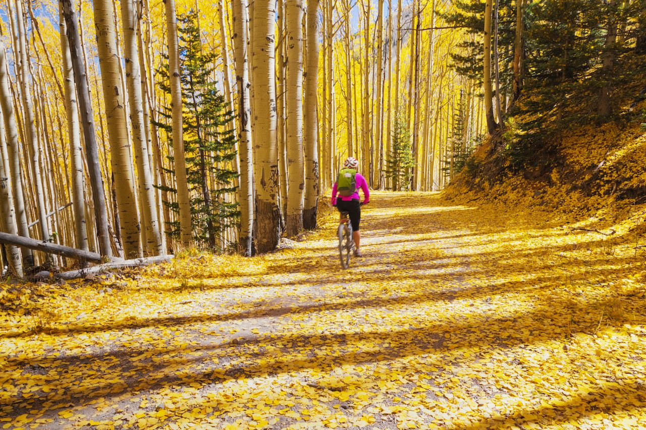 Cyclist riding through autumn leaves on a wooded trail