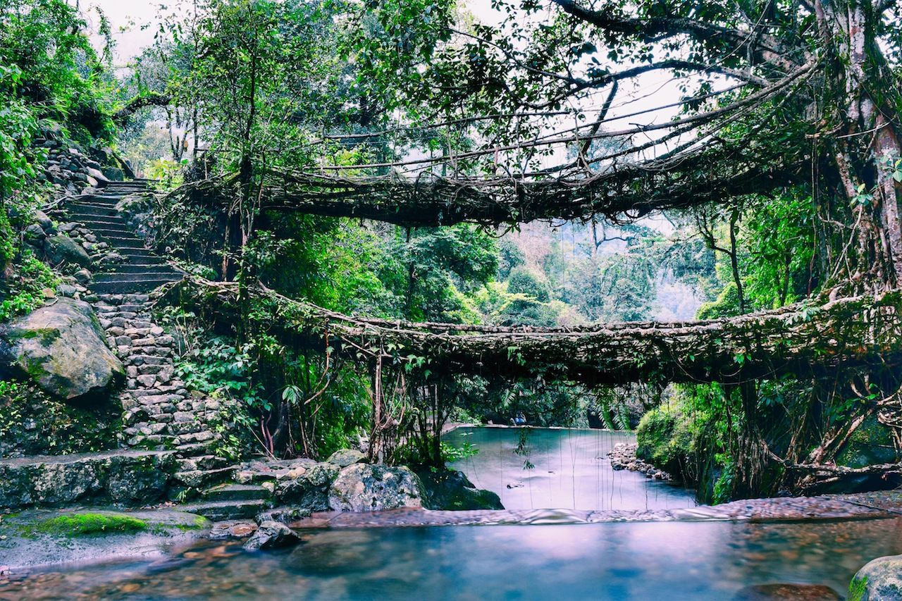 Double Decker Living Root Bridges of Meghalaya