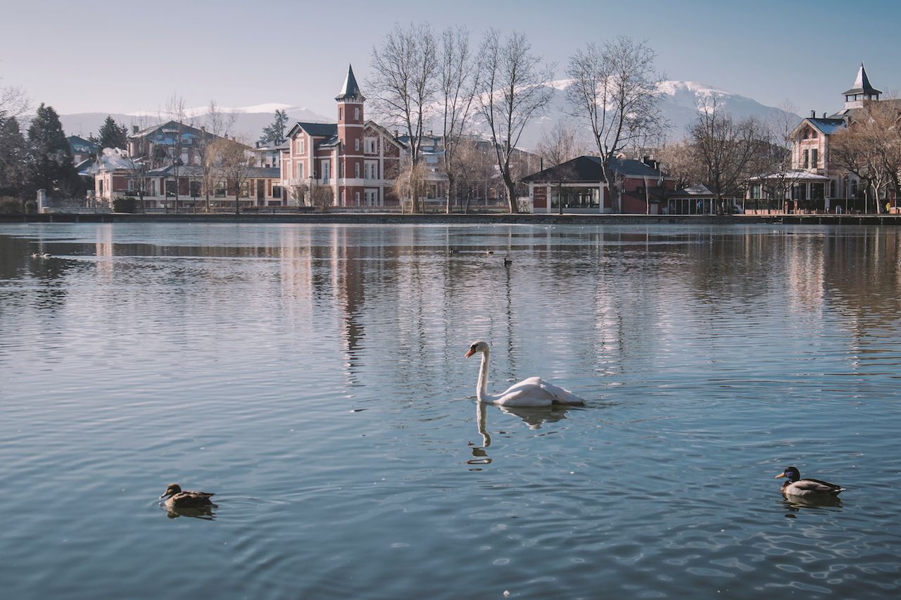 Ducks in a lake with mountains and town in the background