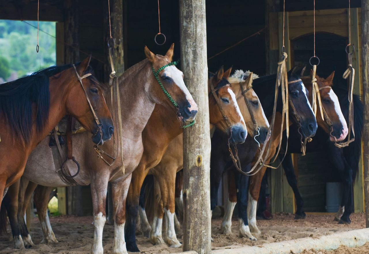 Horses in a stable in the countryside of Uruguay