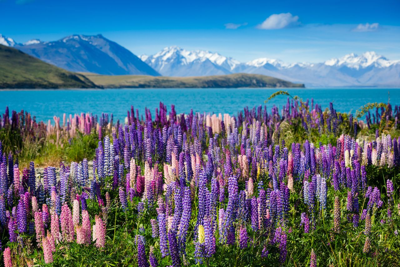 Majestic mountain lake with blooming llupins