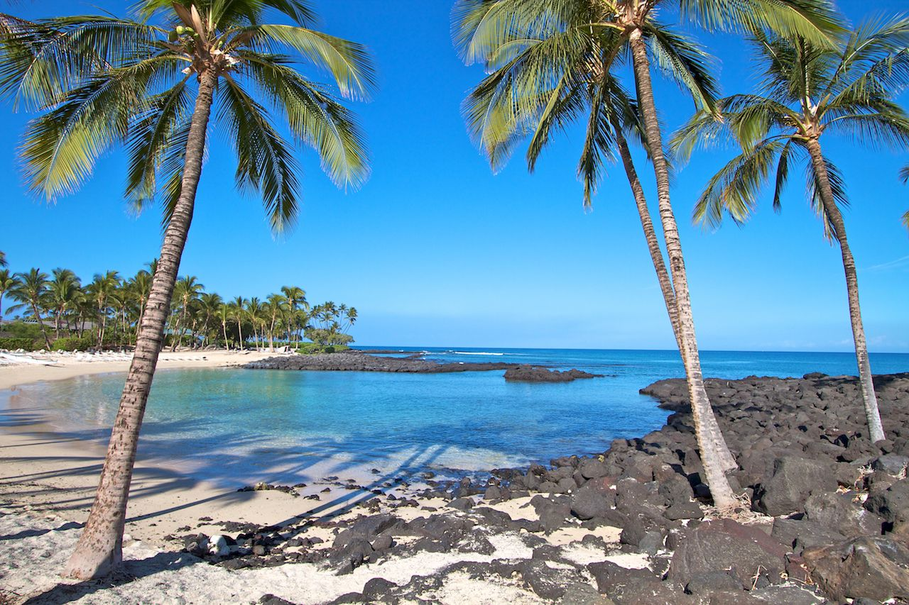 Palm trees line the cove on a Hawaiian Big Island beach