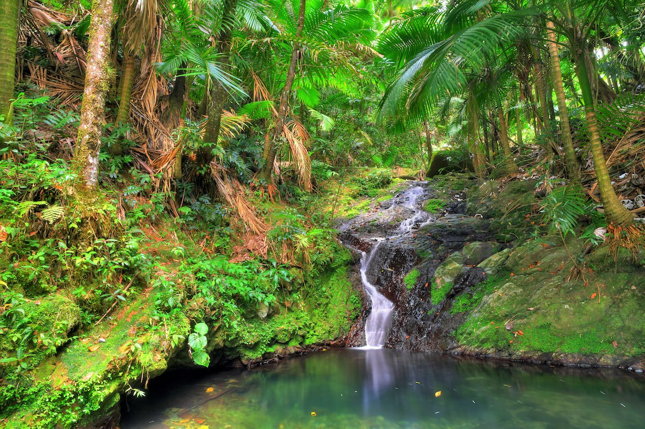 Small waterfall in El Yunque National Forest, Puerto Rico