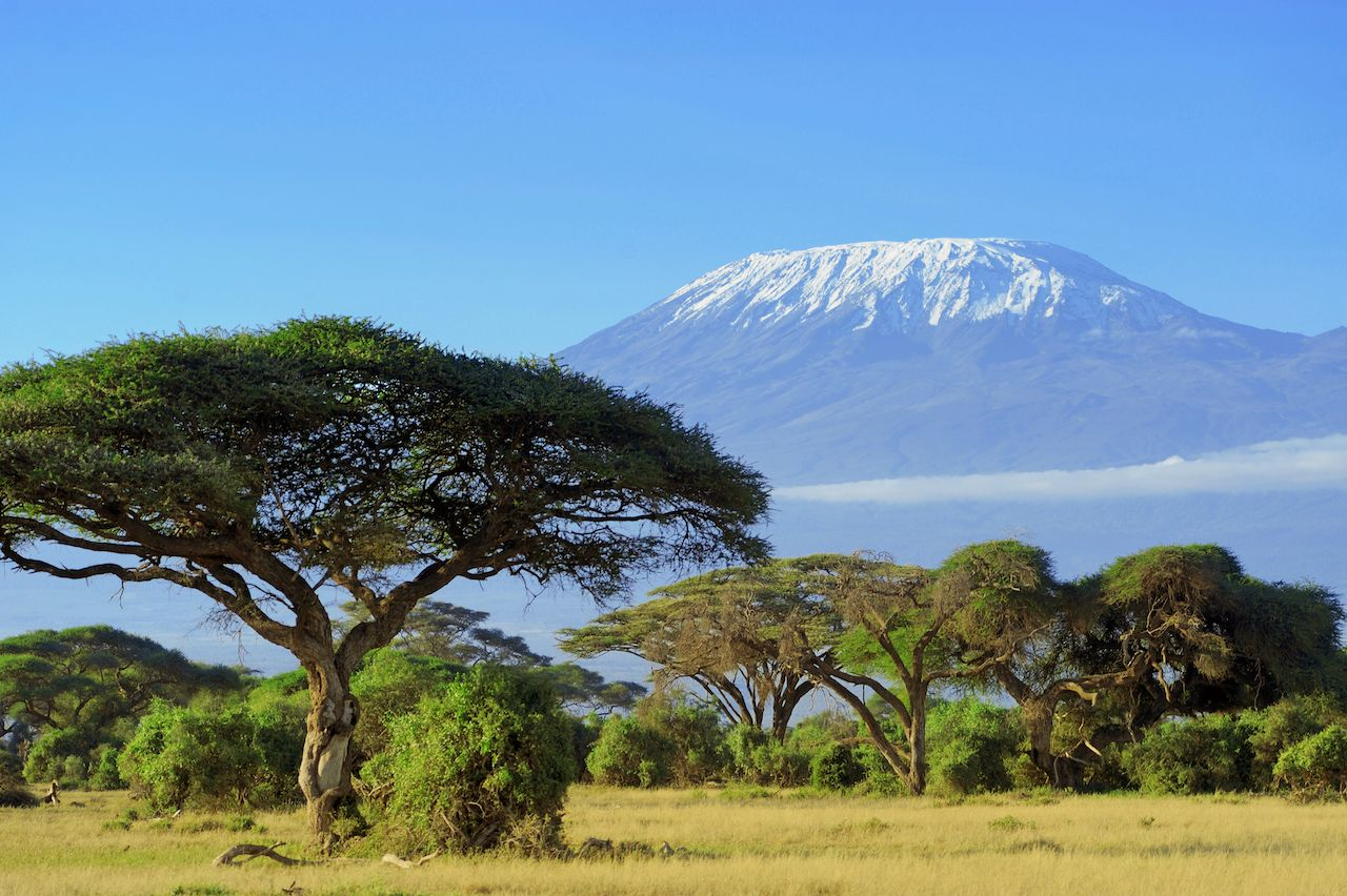 Snow on Mount Kilimanjaro with trees in the foreground