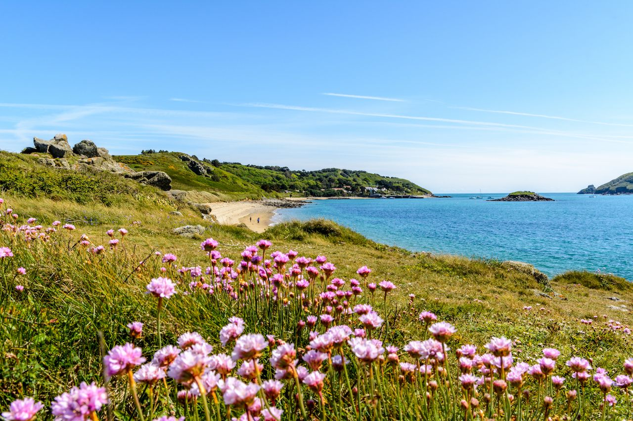 Spring wildflowers on the coast of Herm, UK