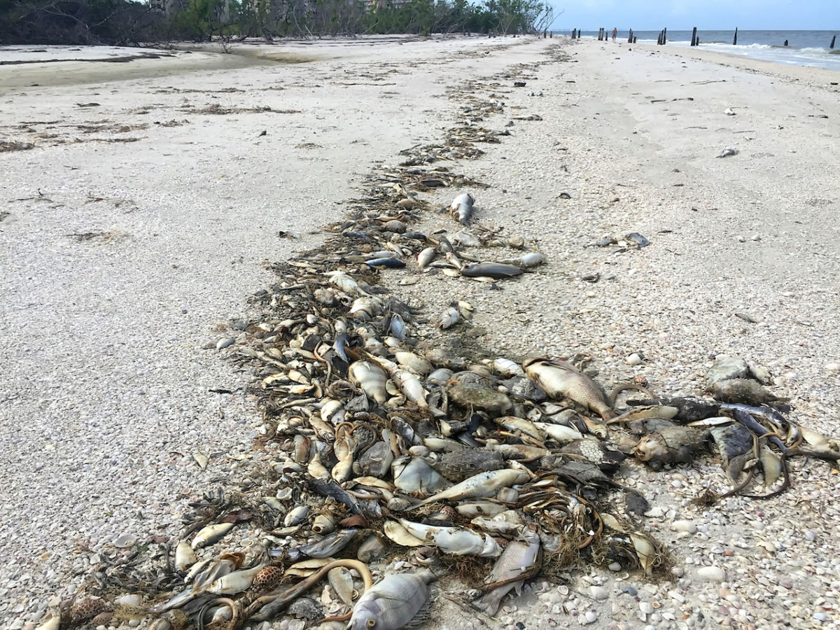 Florida S Red Tide And What It Means For Travelers
