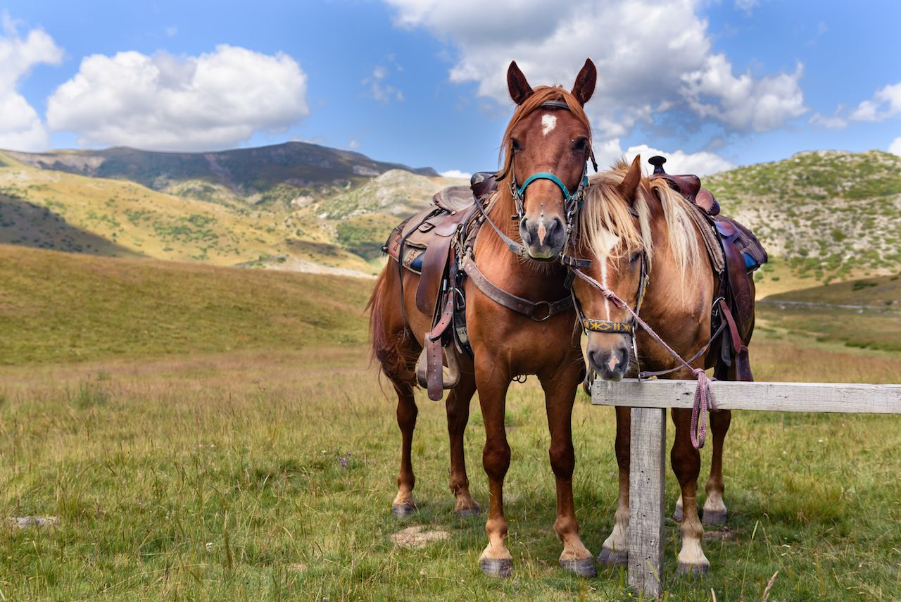 Two horses in Mavrovo National Park in Macedonia