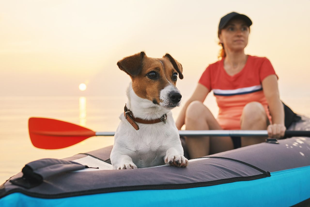 Woman kayaking with her jack russel terrier