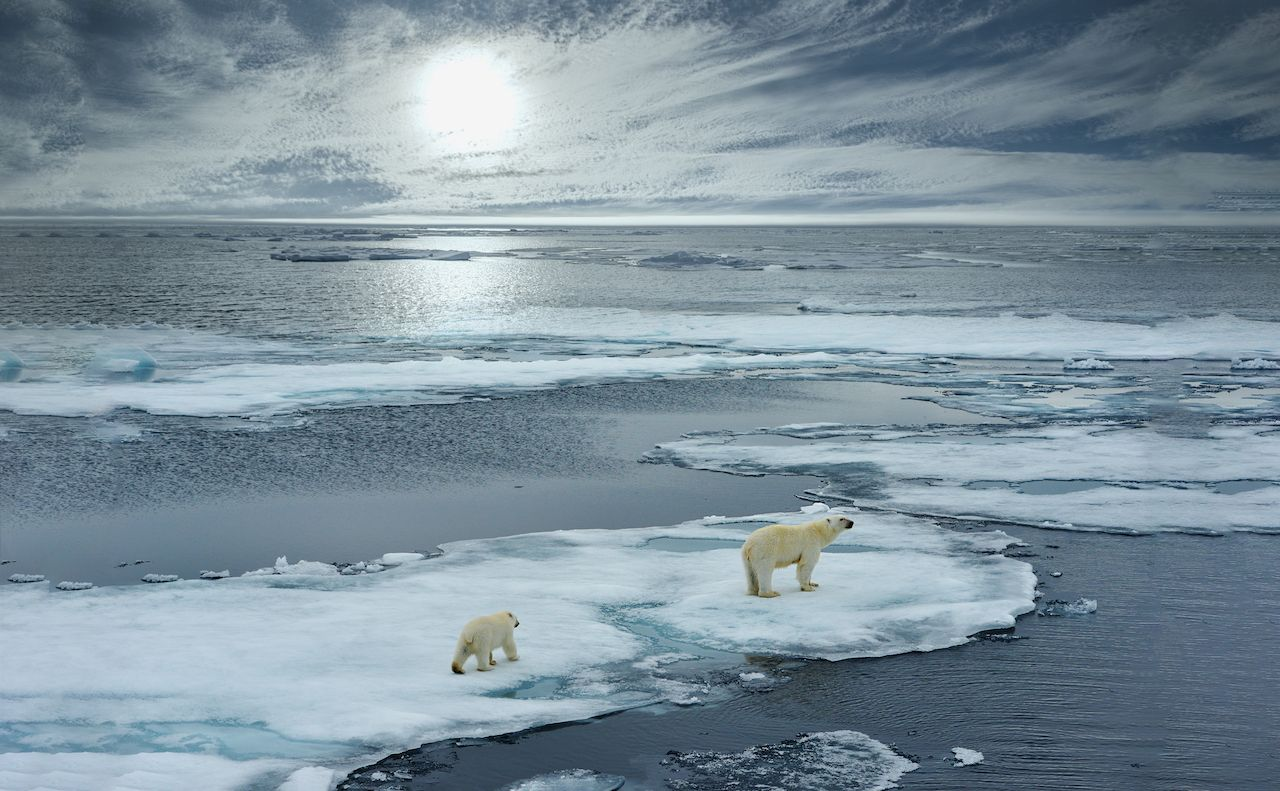 polar bear sow and cub walk on ice floe in norwegian arctic waters