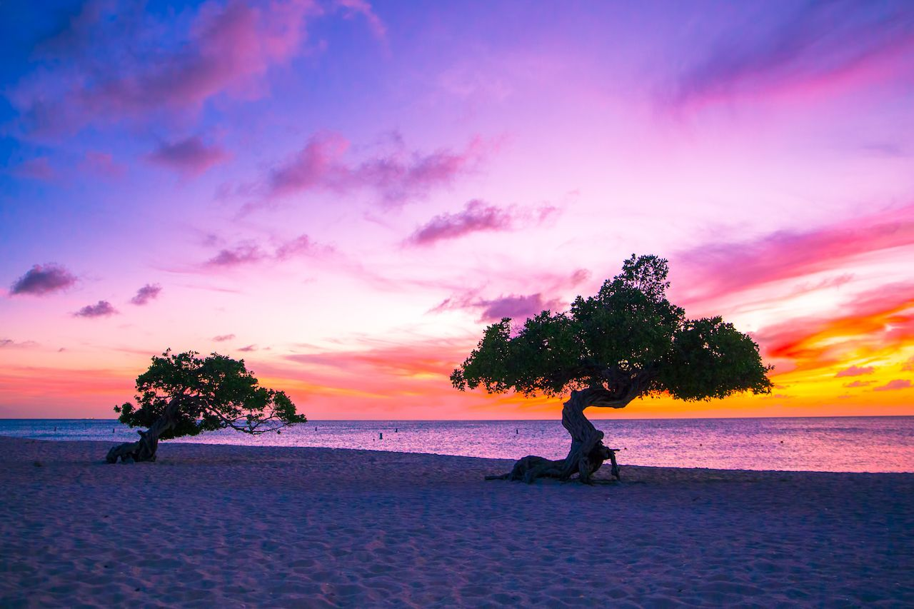 Beautiful divi trees at sunset in Aruba