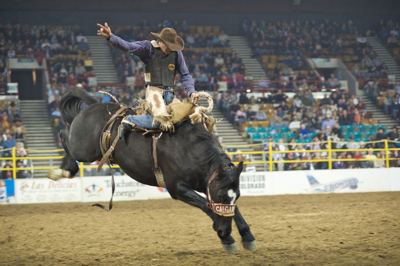 Cowboy Wrinkles in the Bareback Competition at the Great Western Stock Show in Denver