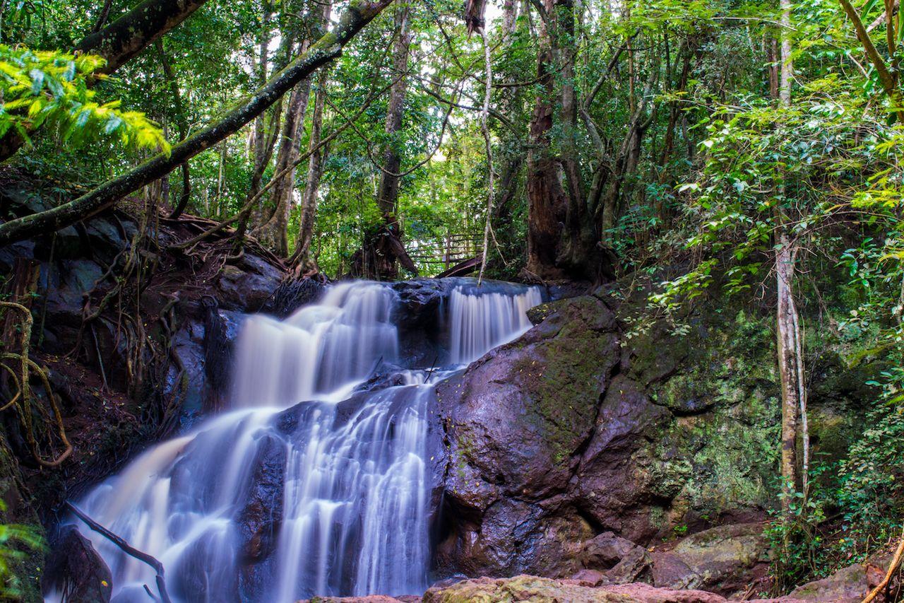 Karura forest near Nairobi, Kenya
