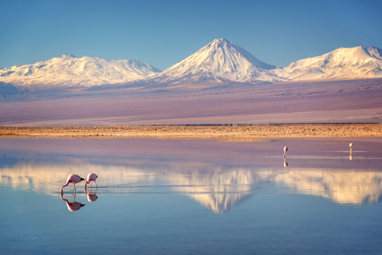 Laguna Chaxa and Andean flamingos, Atacama salar, Chile