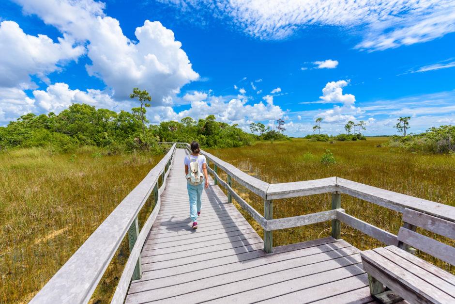Mahogany Hammock Trail of the Everglades National Park