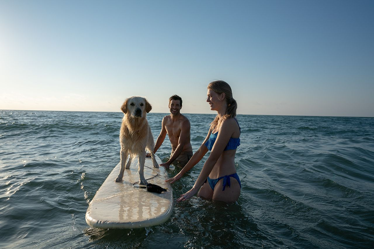 South Padre Island paddleboard pets dog