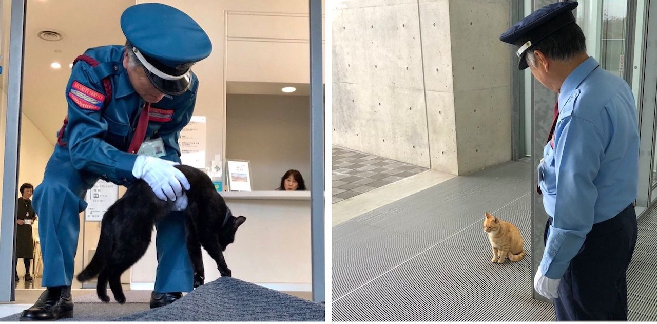 Cats want to break into Japan museum