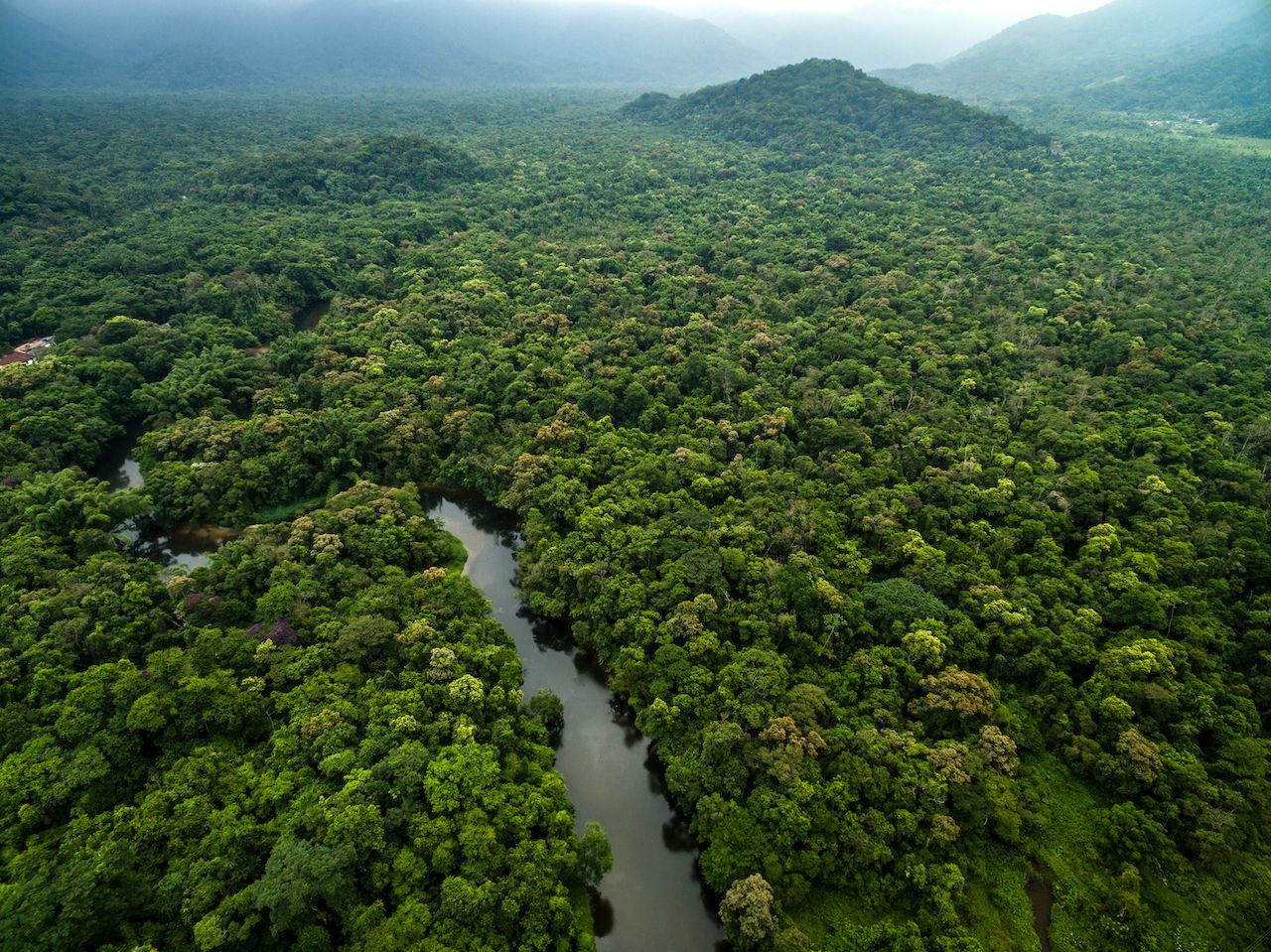 Aerial view of a rainforest in Latin America