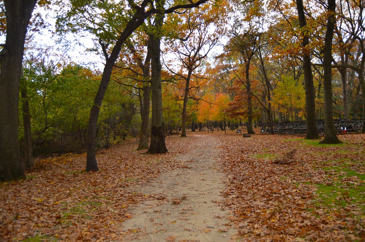 Autumn in the park, beautiful landscape of fall trees in long island park