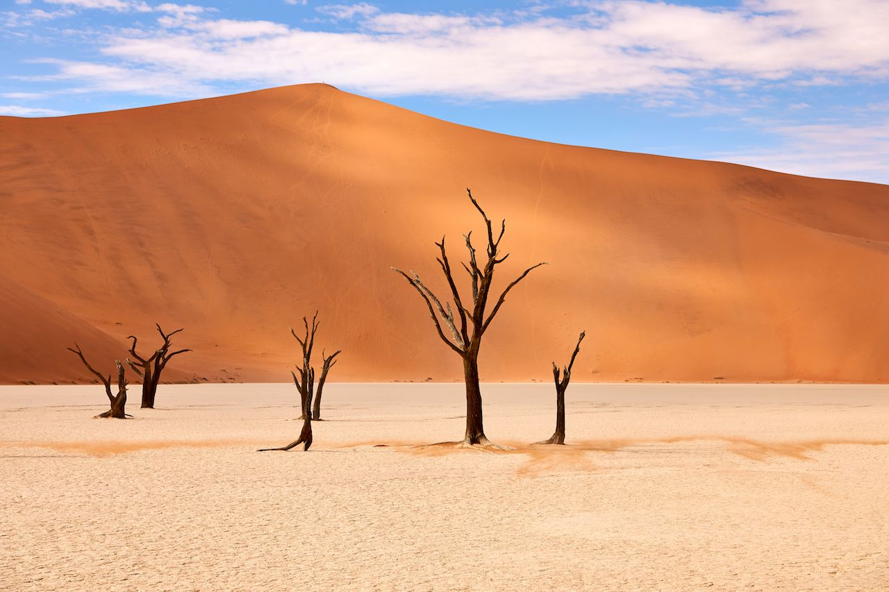 Barren trees in the Namib desert at Deadvlei
