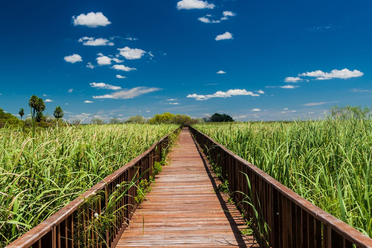 Boardwalk over wetlands in Nature Reserve Esteros del Ibera, Argentina