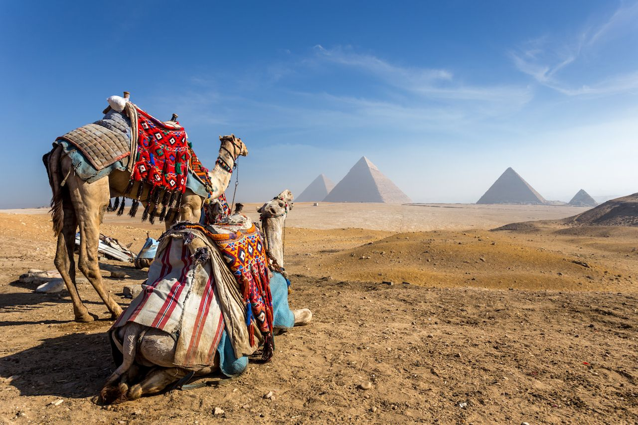 Camels near the pyramids in Cairo, Egypt