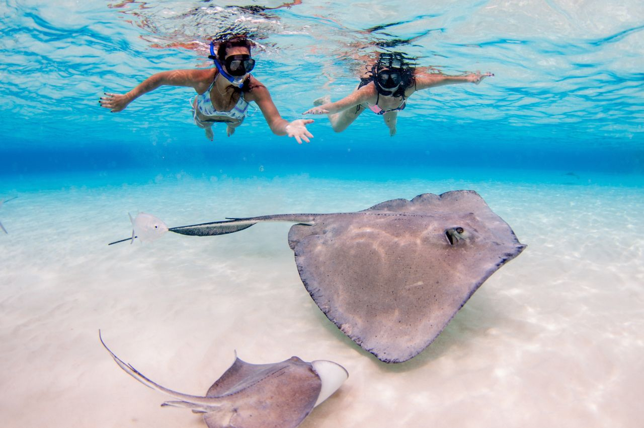 Grand Cayman stingrays