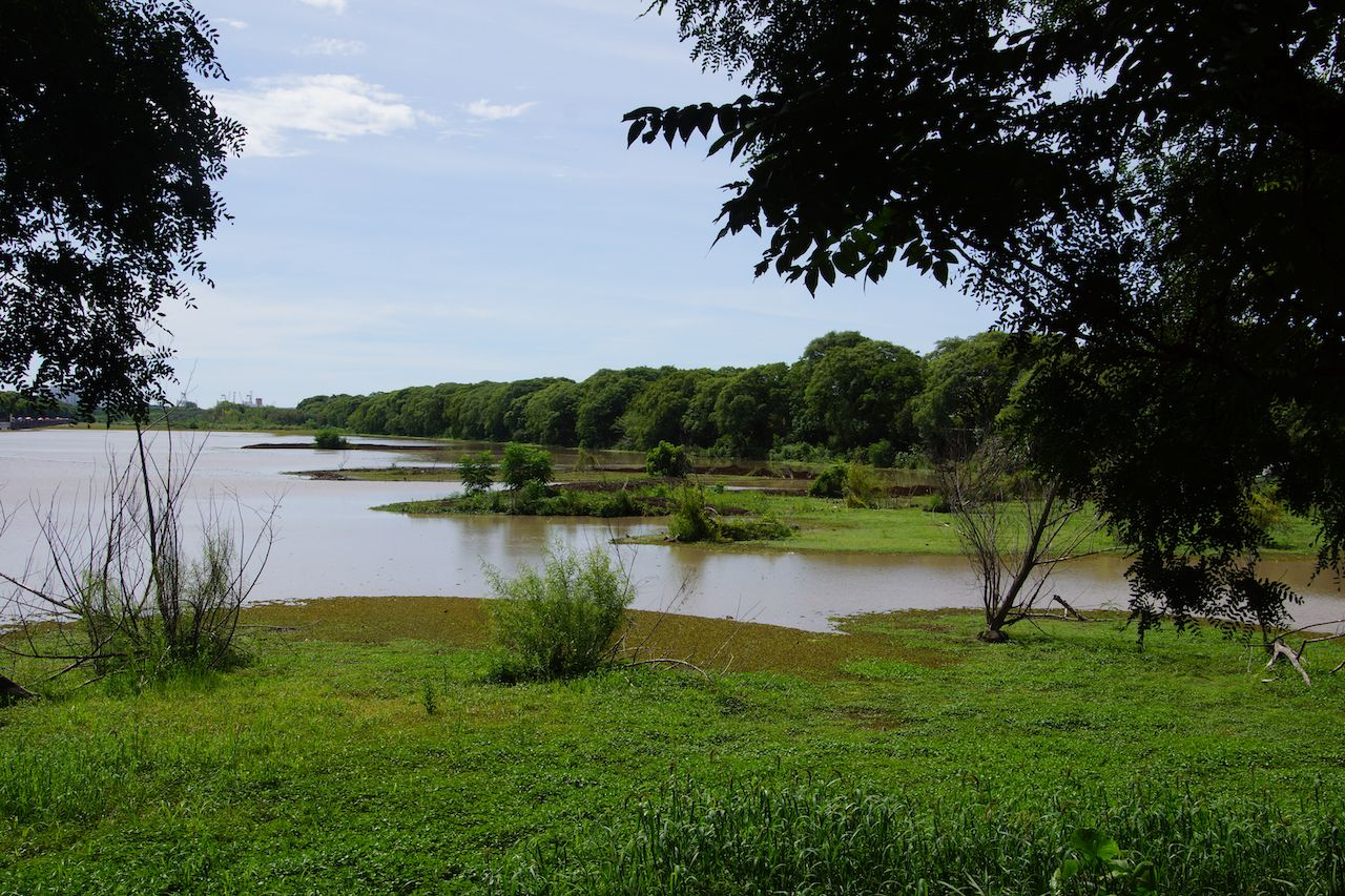 Lake in Reserva Ecologica Costanera Sur, Buenos Aires, Argentina