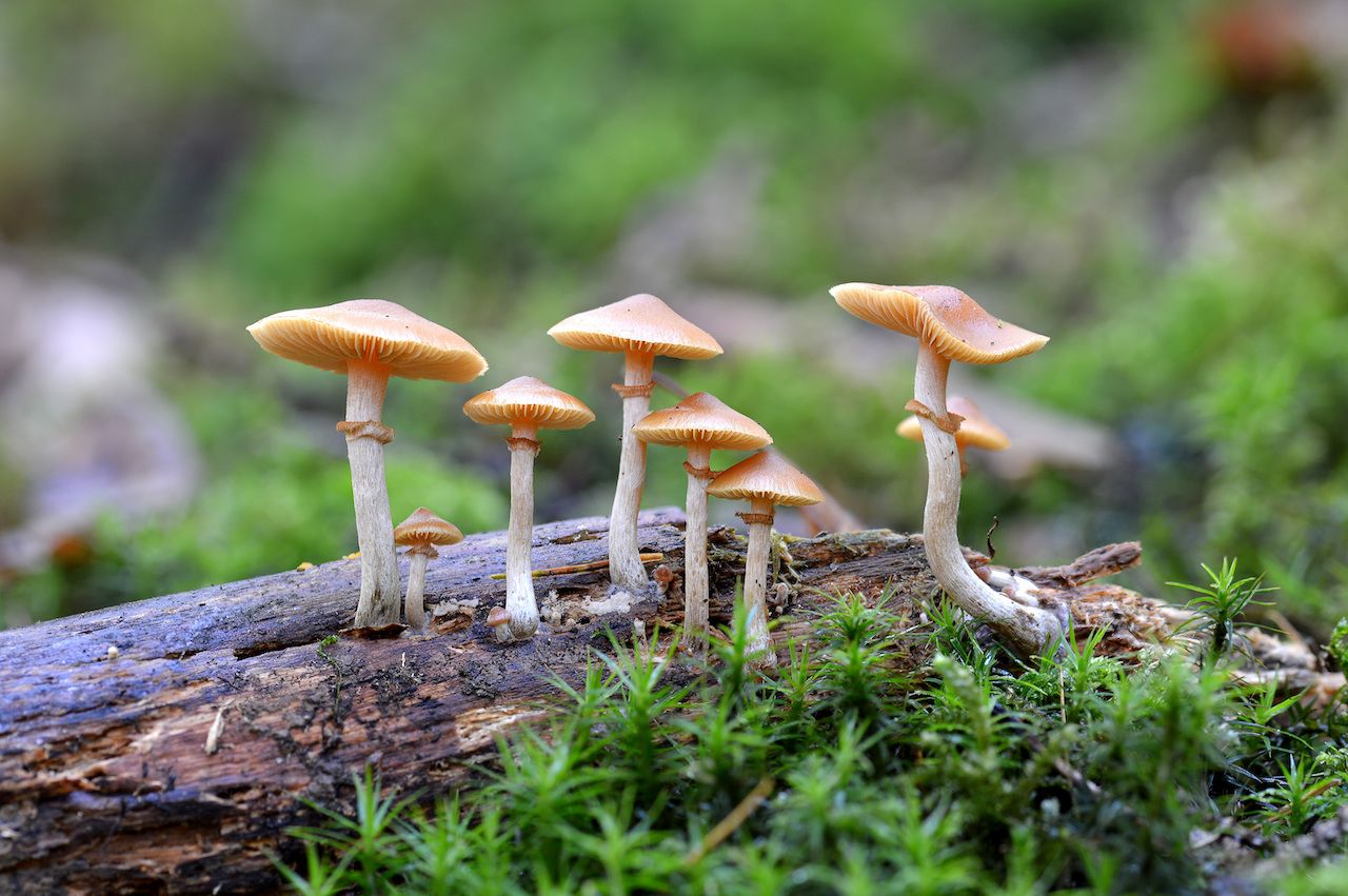 Oregon may make shrooms legal