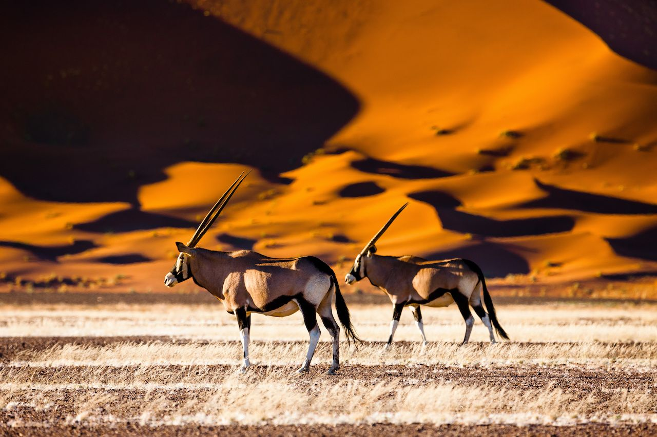 Oryx and dunes, Sossusvlei, Namibia