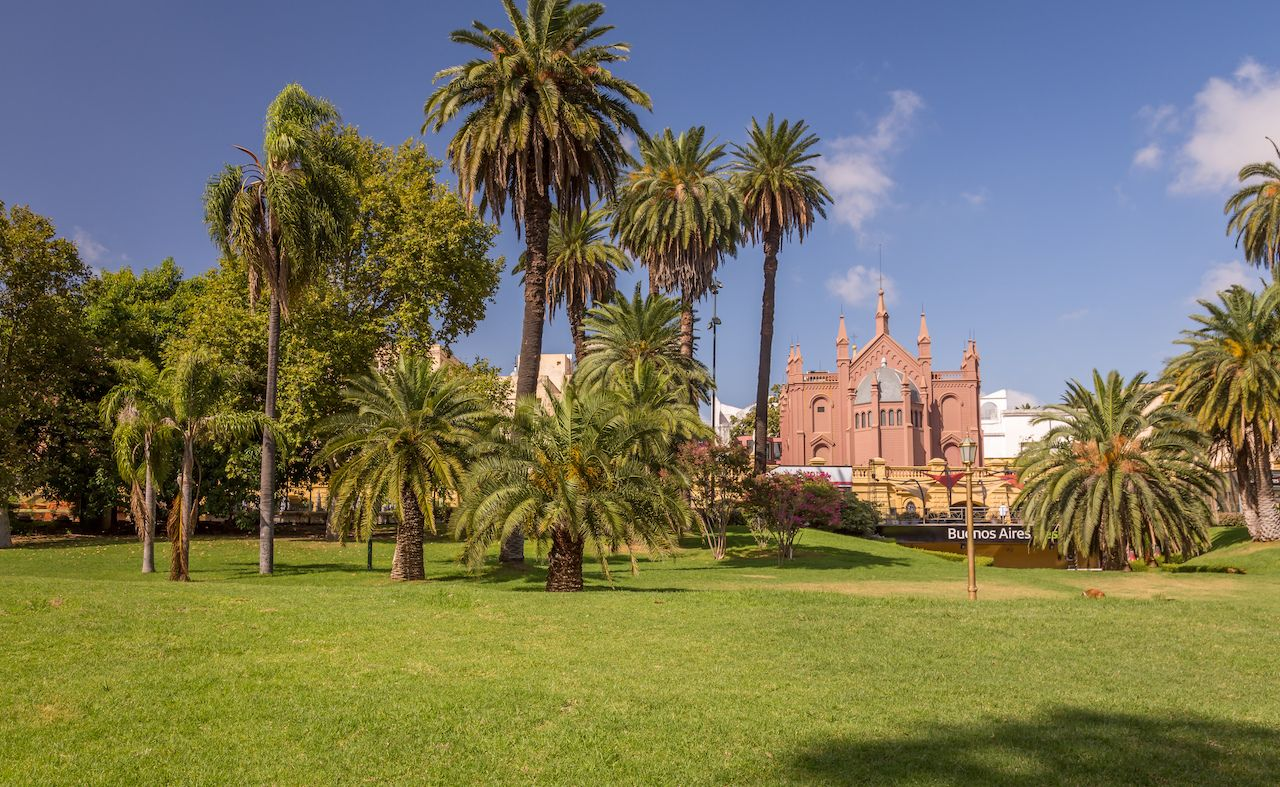 Palm trees in Buenos Aires, Argentina