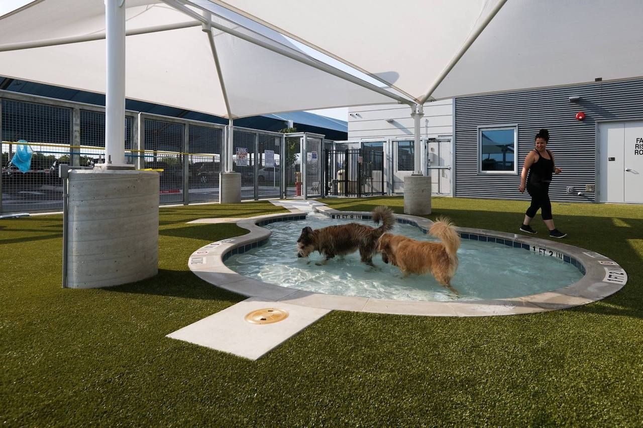 Best airports for dogs in the United States