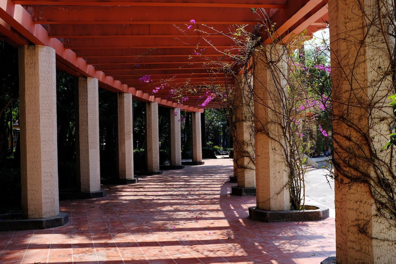 Purple flowers and vines line columns along a trellis along a walkway in La Condesa, Mexico City