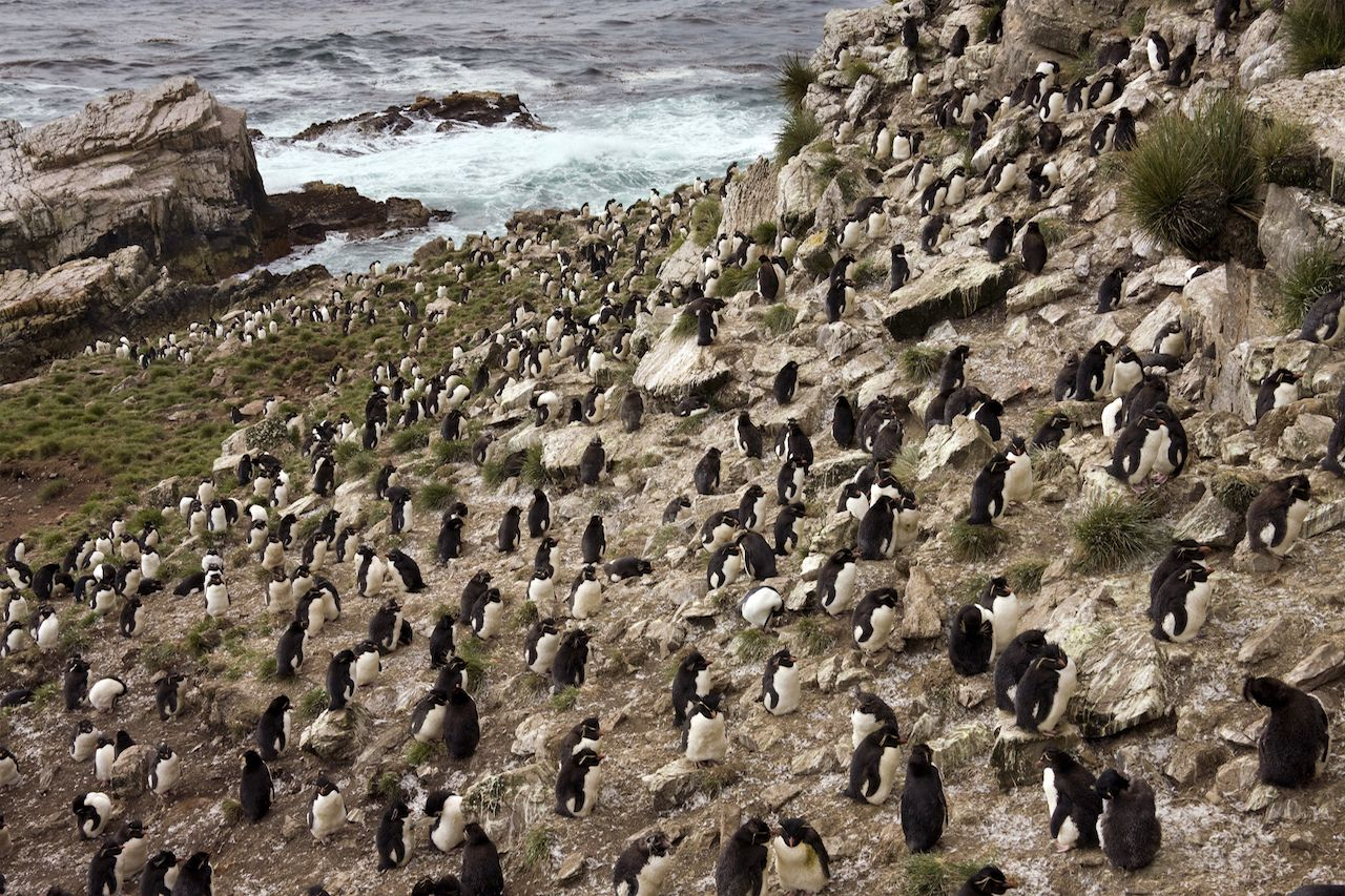 Island in the Falklands is for sale