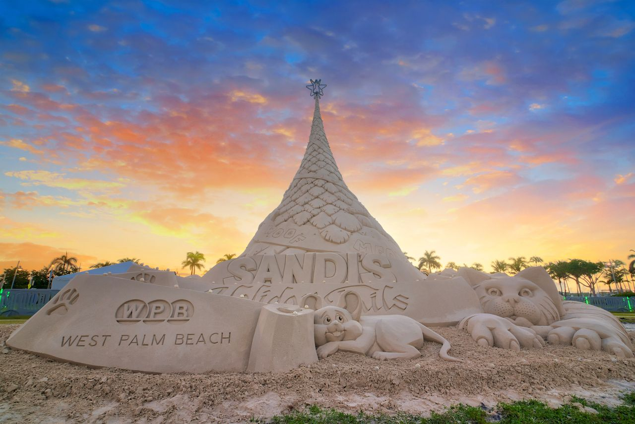 Sand tree in West Palm Beach in Florida