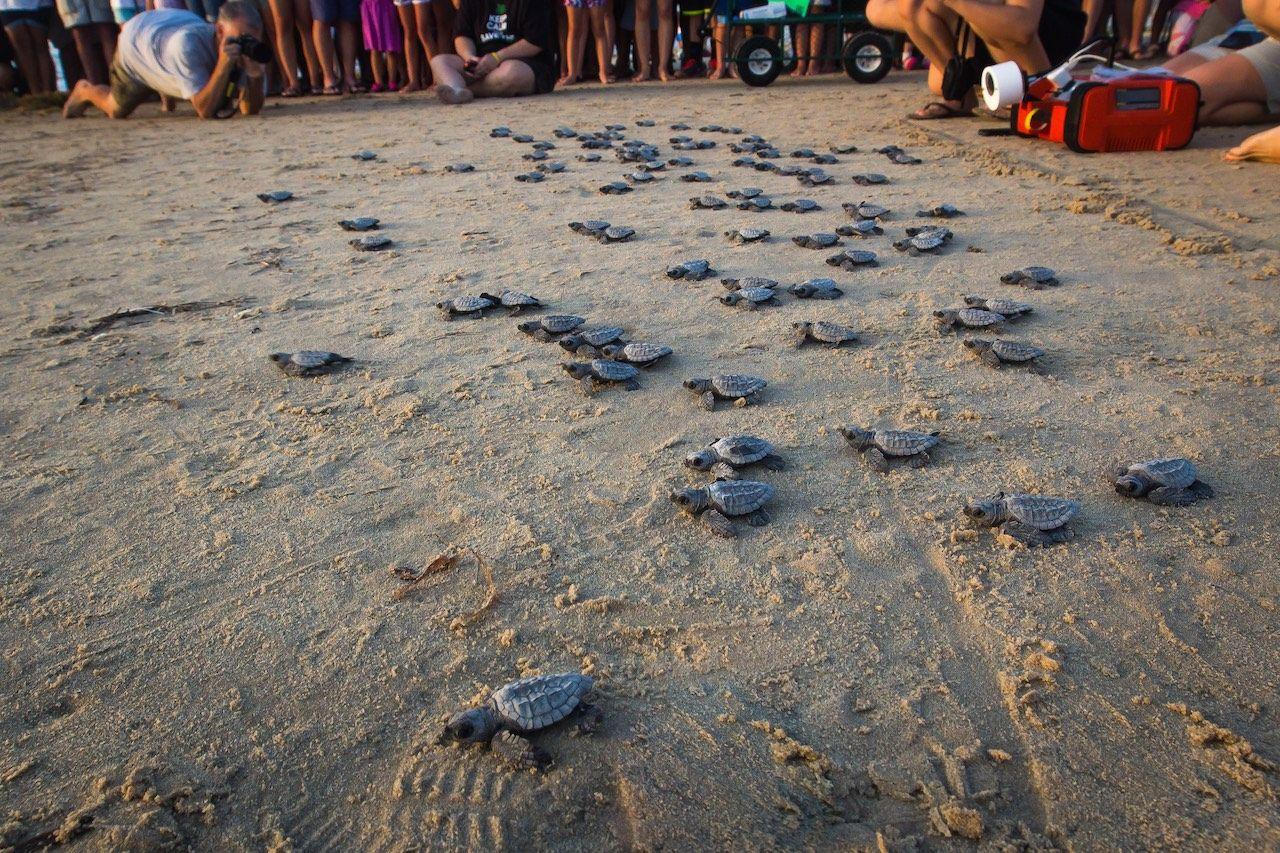 Sea Turtle Release South Padre Island
