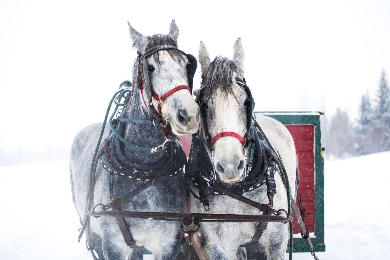 Sun Valley sleigh ride horses Idaho
