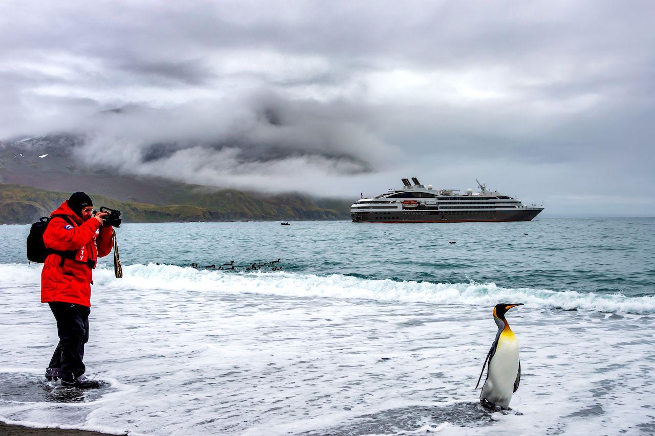 Tourist impact on Antarctic birds