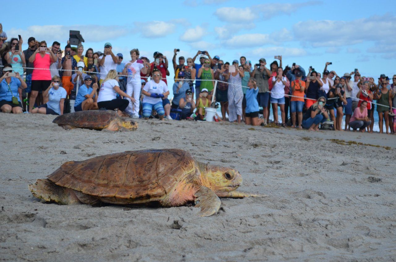 Where to see sea turtles in Florida