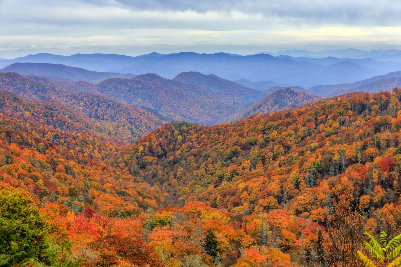 View of fall foliage and mountains in Great Smoky Mountains National Park along the North Carolina Tennessee border